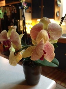 An orchid for Emily